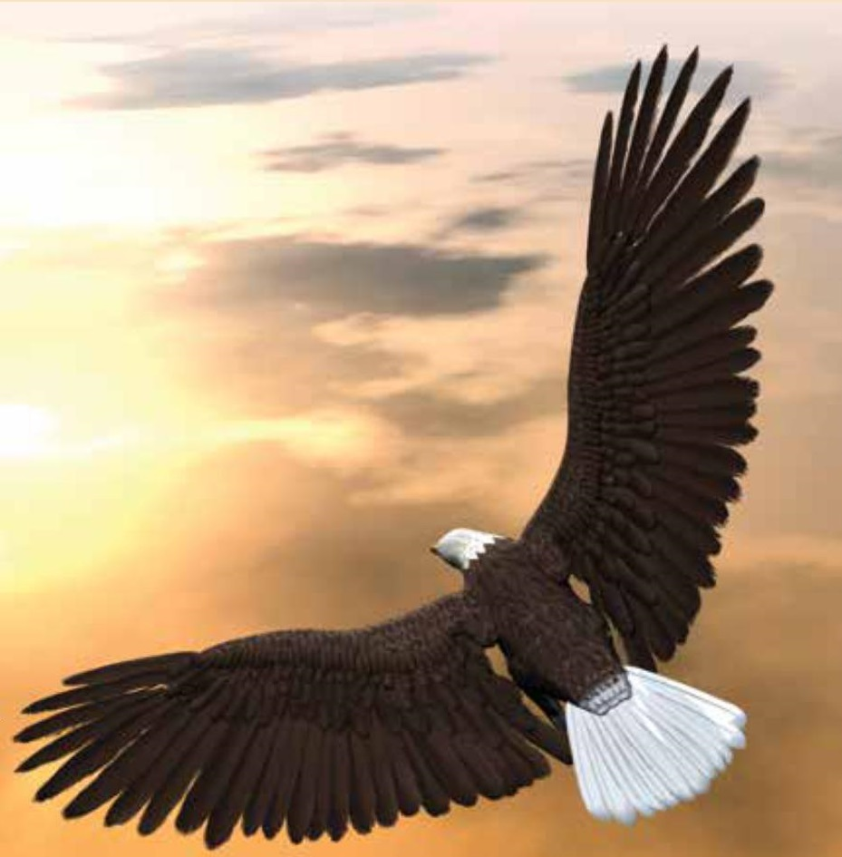 Soaring On Eagles' Wings