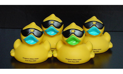 Adopt a duck – and watch the fun