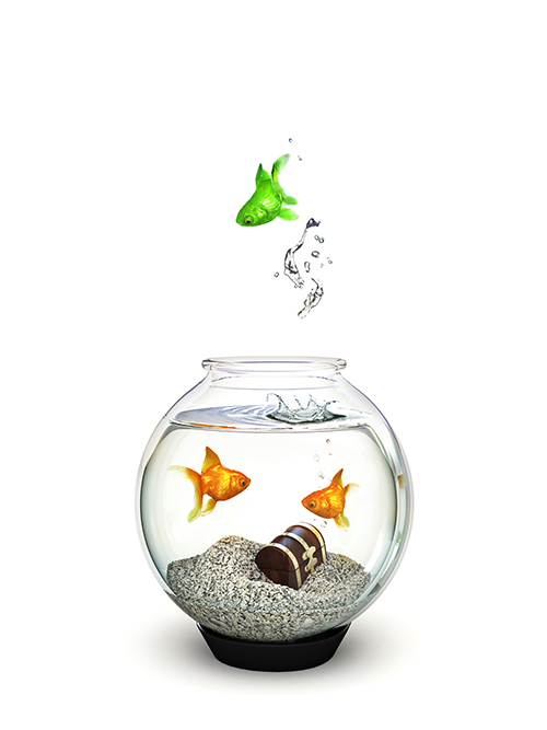 Green fish jumping out of a fishbowl of ordinary goldfish. Being different, freedom, motivation, standing out from the crowd concept.